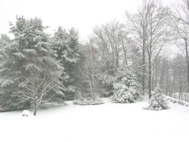 snow_in_the_back_field.jpg